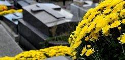 Déposer un chrysanthème le 1er novembre